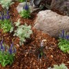 The Pros and Cons of Different Types of Mulch