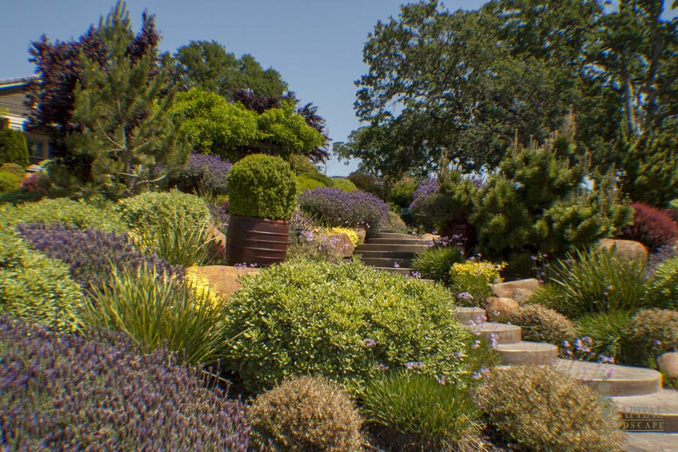 Irrigation And Drainage Systems Sacramento Landscape