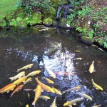 Koi Ponds Citrus Heights