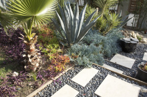 Drought Tolerant plants for Capital Landscape