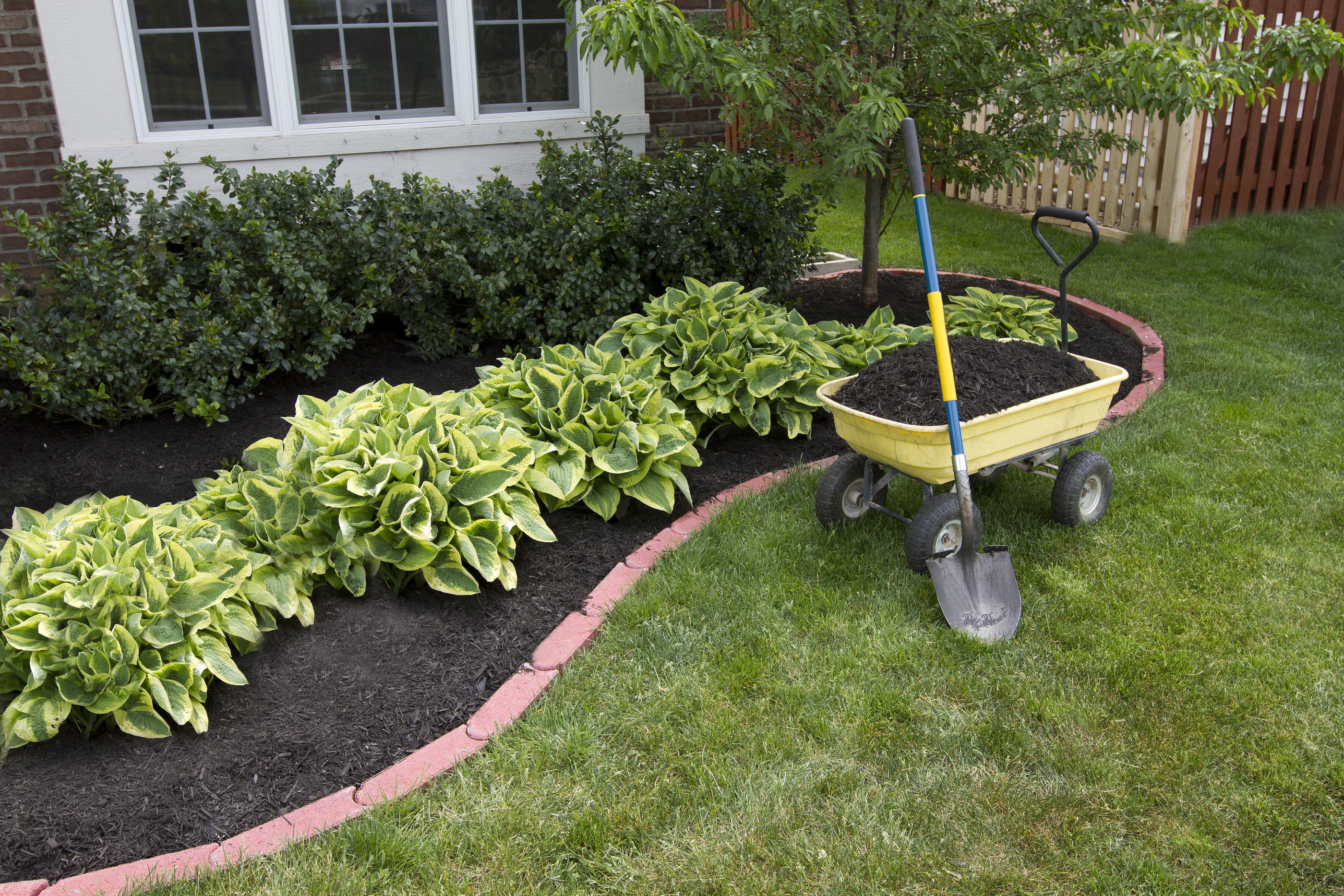Biggest lawn care mistakes sacramento landscape for Easy care shrubs front house