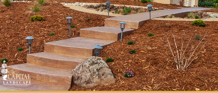 Drought Proof Landscape Solutions