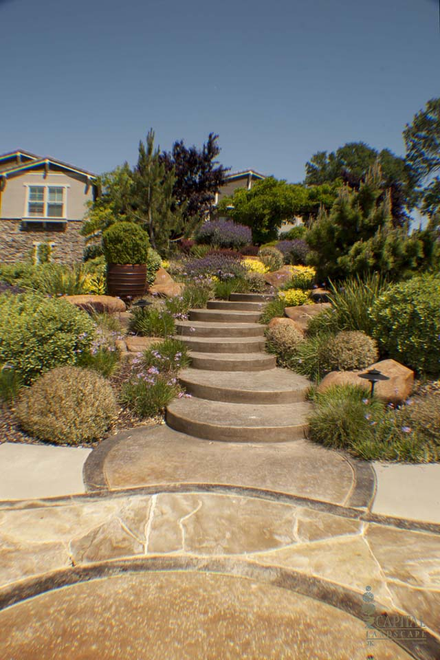 Drought Tolerant Backyard Designs