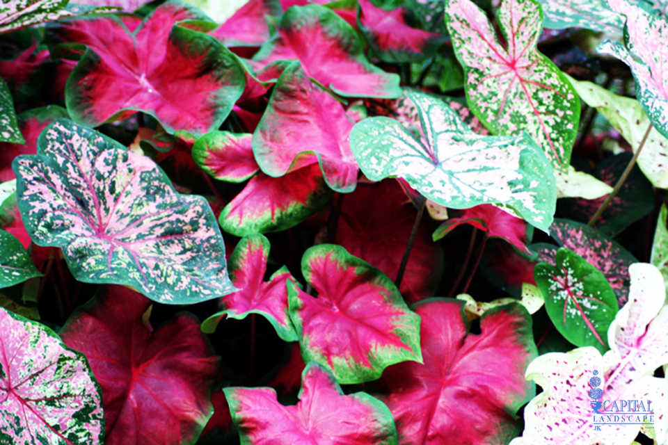 Sacramento Landscaping Recommended Shade Plants