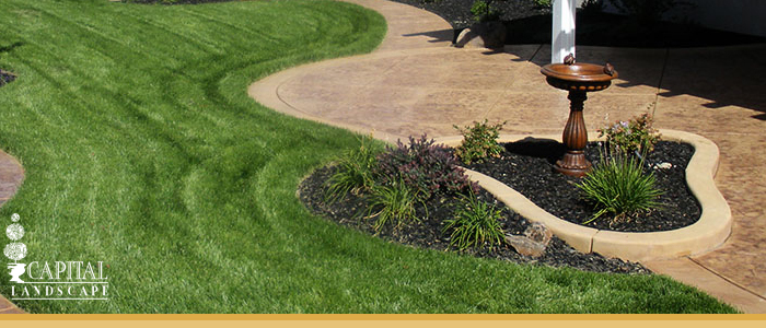 Curb Appeal In Landscape Design Sacramento Ca