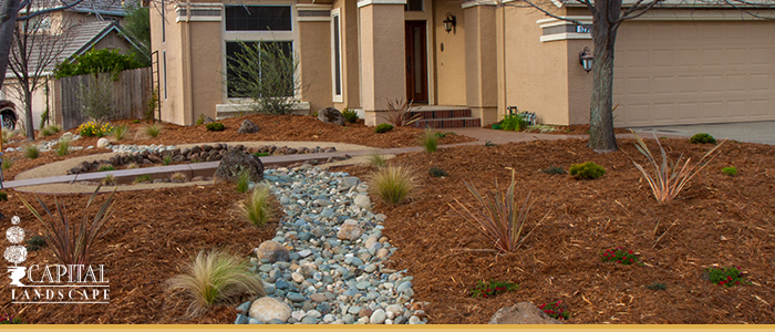 Drought Proof Landscape Design