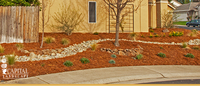 Drought Proof Landscapes in Granite Bay