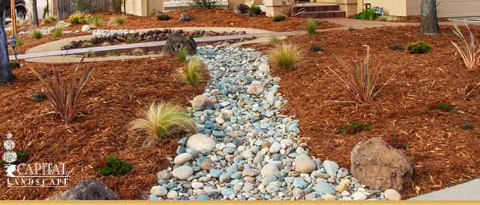 Drought Proof Landscaping In Elk Grove California