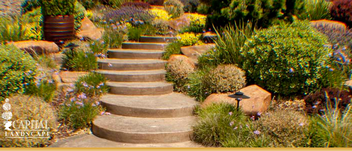 Sacramento Area Drought Tolerant Landscape Design Ideas